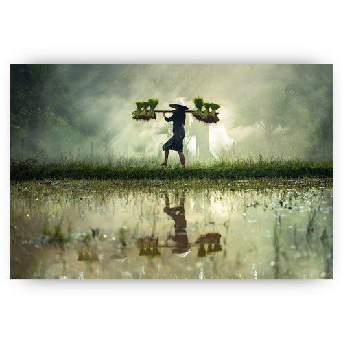 poster thailand rijstplantage