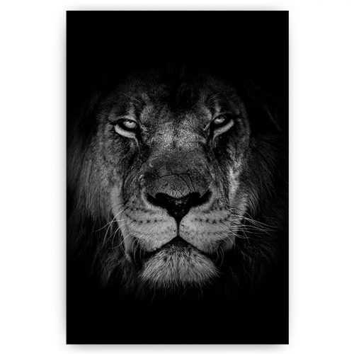 poster portret leeuw