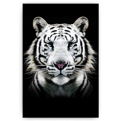 poster tijger