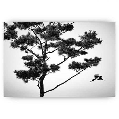 poster vogel en boom