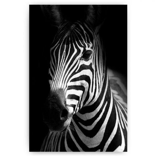 poster zebra portret