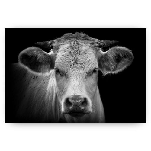 Wanddecoratie portret koe