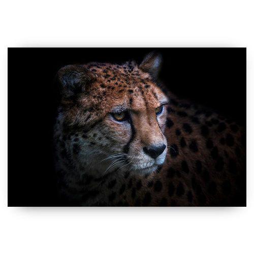 poster jachtluipaard cheetah