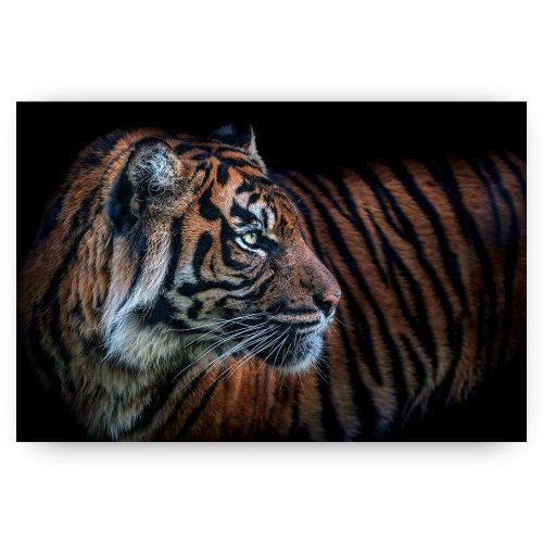 poster schilderij tijger
