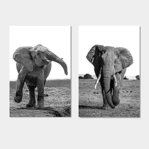 poster olifanten