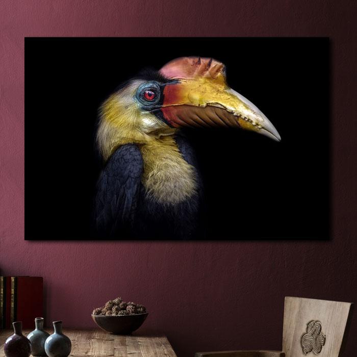 poster schilderij neushoornvogel op zwart