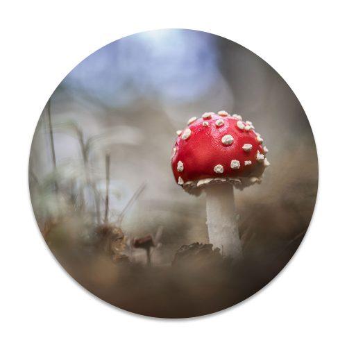 vliegenzwam paddenstoel