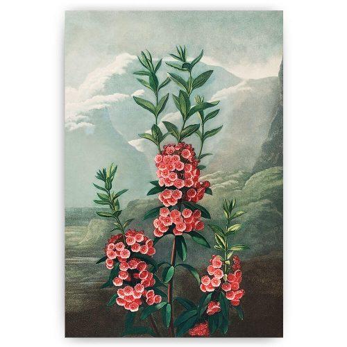 kalmia bloem